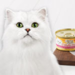 Free Fancy Feast Delights With Cheddar