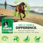 Having a Picnic With Our Dog With IAMS Visible Difference Products